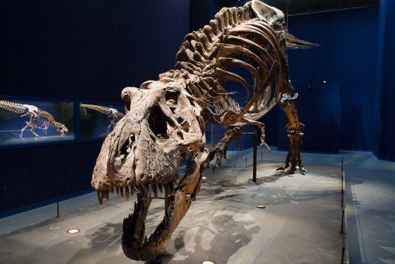 Un T.Rex à Paris