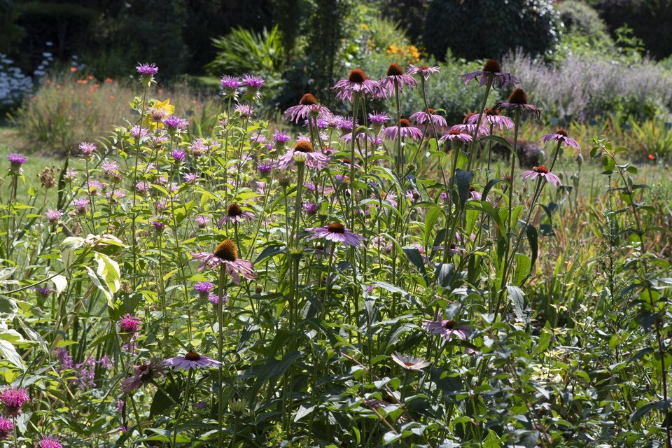 jardins des plantes à Paris