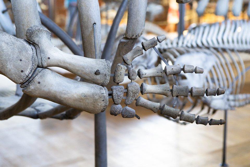 cette galerie du Muséum d'histoire naturelle à Paris.