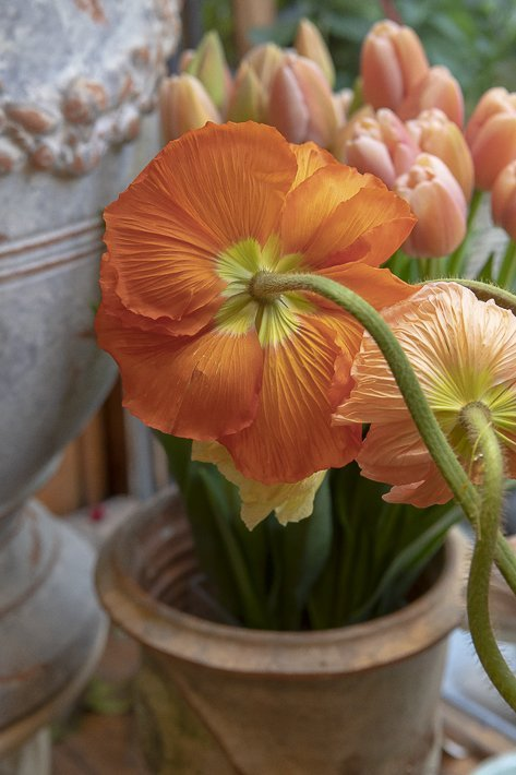 fleuriste-stanislas-draber-4