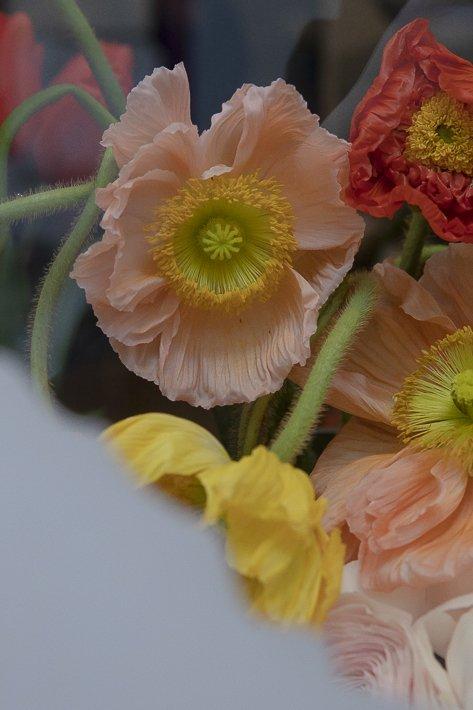 fleuriste-stanislas-draber-5