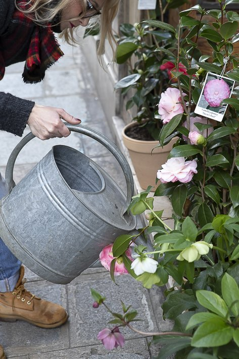 fleuriste-stanislas-draber-6