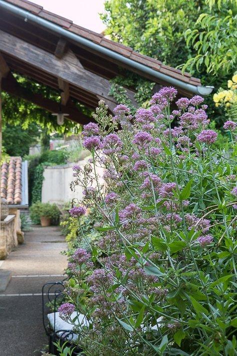les-jardins-de-brantome-3834