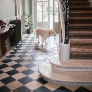 chien hall maison Les Tilleuls
